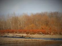 fishing creek 4