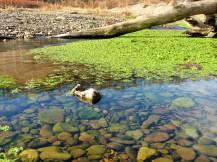 fishing creek 7