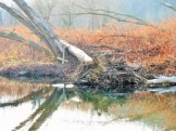 fishing creek 9