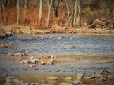 fishing creek 10