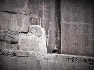 pigeon on the tracks